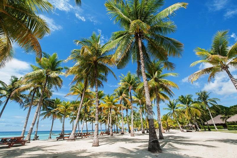 リゾート内に生い茂る椰子の木が南国の雰囲気を演出