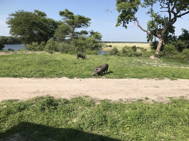 ボツワナ チョベ 動物