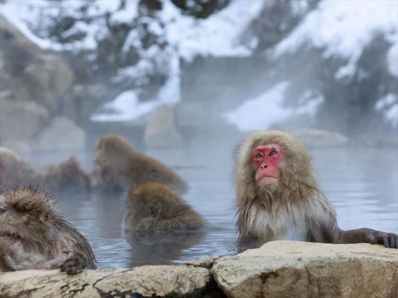 長野県の自然の観光地!上高地や千畳式カールは必見!地獄谷の猿も
