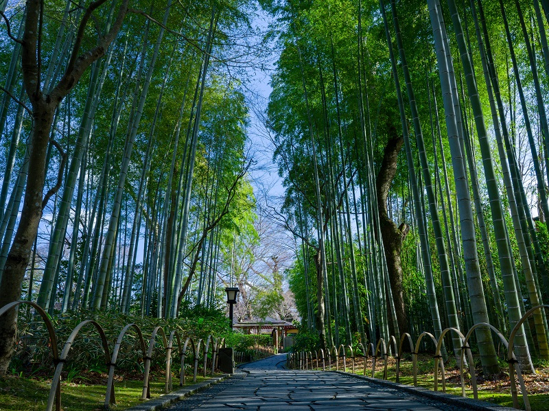 修善寺の温泉おすすめ5選!伊豆半島は他にも温泉や観光地がいっぱい!